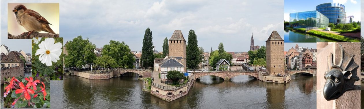 Strasbourg-Ecologie
